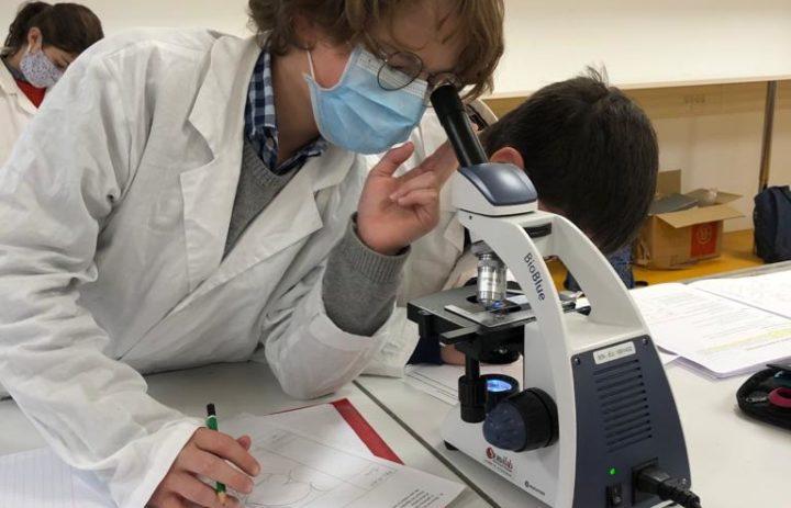 Microscope poumon (2)