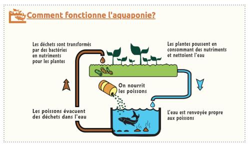 aquaponie 4